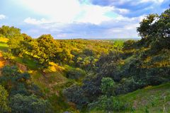 Peaceful evening in a green field with trees. And vegetation royalty free stock image