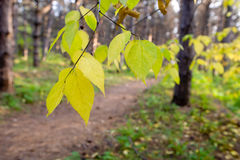 Peaceful fall scene. Beautiful peaceful fall scene in forest Stock Photo