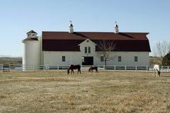 Peaceful Farm Scene. Horses graze in front of a historic farm building in Colorado, USA Stock Photos