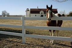 Peaceful Farm Scene. A horse in front of a historic farm building in Colorado, USA Royalty Free Stock Images