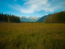Peaceful field in Alberta, Canada Stock Image