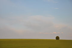 Peaceful field landscape Royalty Free Stock Image