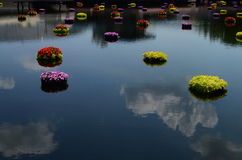 Peaceful flowers on water at Epcot Stock Image