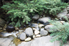 Peaceful flowing stream in  forest Stock Images