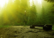 Peaceful forest. Scene with beautiful sunshine Royalty Free Stock Photography