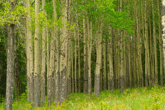 Peaceful forest Stock Image