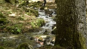 Peaceful forest landscape. A man is walking in background. Small river cascade falls over rocks. Peaceful forest landscape. A man is walking in background. Small stock video