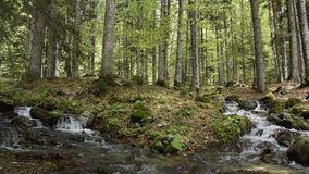 Peaceful forest landscape with small river cascade falls over rocks. Peaceful forest landscape with small river cascade falls over mossy rocks stock video footage