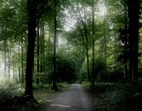 Peaceful Forest. A peaceful forest, in a mild misty light enlighted by some sun Stock Photography