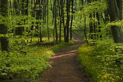 Peaceful forest path Stock Photo