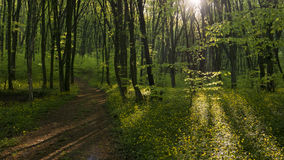 Peaceful forest path Stock Photos