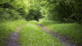 Peaceful Forest Road Royalty Free Stock Image