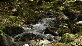 Peaceful forest small river cascade falls over rocks. Peaceful forest small river cascade falls over mossy rocks stock video footage