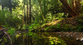 Peaceful Forest Stream Stock Photo