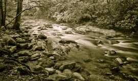 Peaceful Forest Stream Royalty Free Stock Photo