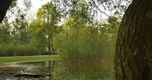 A peaceful garden scene, bushes, trees and a quiet water lake pond. 4k stock video footage