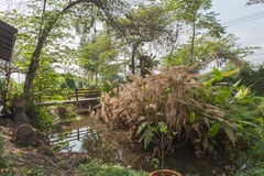 Peaceful Garden in sunny day Royalty Free Stock Photography