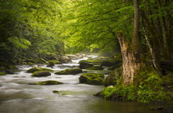 Peaceful Great Smoky Mountains National Park Royalty Free Stock Images