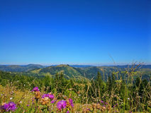 Peaceful green mountains covered of grass under the clear blue sky Stock Images