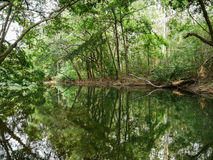 Peaceful green nature with quiet pond and trees reflection in water Royalty Free Stock Image
