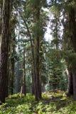 The woods, Oregon Stock Image