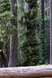 The woods, Oregon Stock Photos