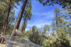 Peaceful Hammock Hanging Among the Pine Trees Stock Photography