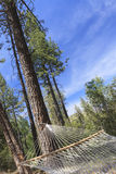 Peaceful Hammock Hanging Among the Pine Trees Stock Photo