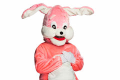 Pink rabbit suit isolated on white background. Peaceful, happy bunny isolated on white background Royalty Free Stock Photos
