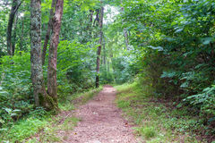 Peaceful Hiking Trail Royalty Free Stock Photography