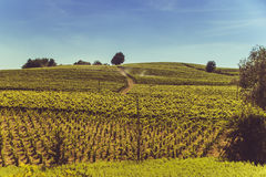 Peaceful hills and wild vineyards. Peaceful hills with wild vineyards Stock Photos
