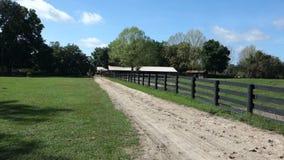 A peaceful horse farm in ocala stock video