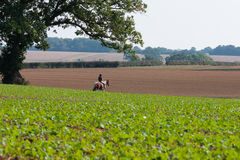 Peaceful horse & rider in Bedfordshire landscape Stock Images