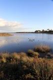 Peaceful Lagoon Stock Photography