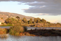 Peaceful Lagoon. Peaceful late afternoon at Malibu Lagoon state beach, Malibu California Royalty Free Stock Photos