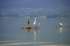 Peaceful lake and birds Stock Image