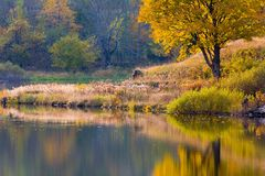 Peaceful lake coastline in Autumn Royalty Free Stock Images