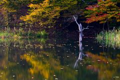 Peaceful lake coastline detail in Autumn. With one tree protruding on water surface Royalty Free Stock Image