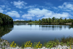 Peaceful lake in green spring summer Stock Photography