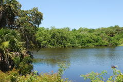 Peaceful lake in a nature preserve in Sarasota Florida. A nature preserve in Florida with trees and a blue skies Royalty Free Stock Photography