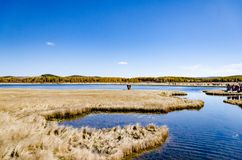 Peaceful lake under the blue sky in deep autumn on the grass land Royalty Free Stock Images
