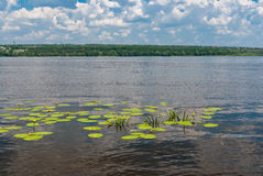 Peaceful landscape on a  Dnepr river at June Stock Photography