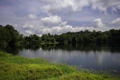 Landscape on wetland stock photography