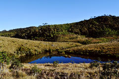 Peaceful landscape of a mountain plateau. Early morning at Horton plains in Sri Lanka Royalty Free Stock Photos