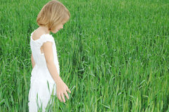 Peaceful Life. A young girl standing in a field of green wheat wearing a white dress Royalty Free Stock Photography