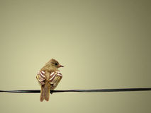 A Peaceful and Lovely Yellow Bird Resting on Clothesline Stock Images