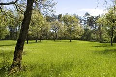Peaceful Meadow. A green meadow with trees Royalty Free Stock Photo