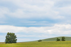 Peaceful meadow in summer. With nice sky Stock Image