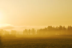 Misty Yellow Morning Royalty Free Stock Photography