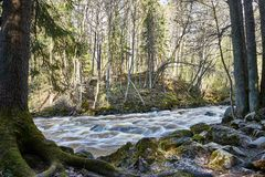 Peaceful Moody River scene on forest. Peaceful moody river scene forest rocks nature natural roots trees spruce fairytale fantasy park landscape beautiful stock image